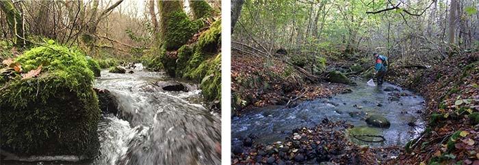 1.De fysiske forhold i Bjergskov Bæk er optimale for søørreder