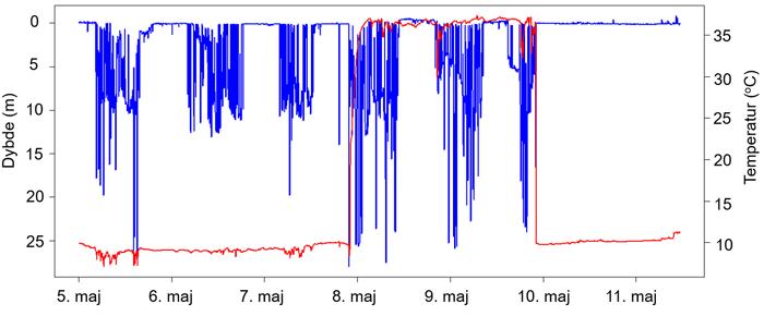 Temperatur- og dybdeprofil for mærke fra en havørred, der blev ædt af en sæl eller et andet varmblodet dyr.