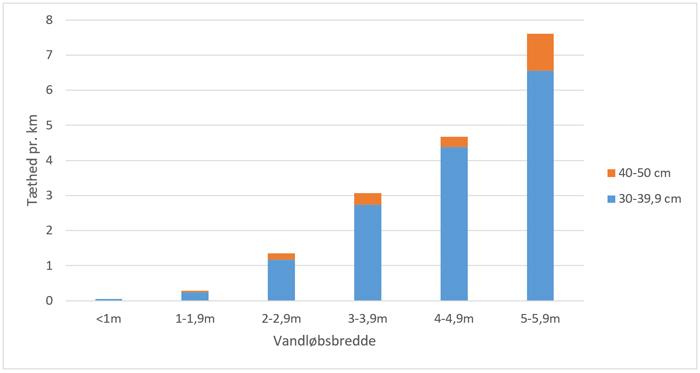 Bækørreder - mængden af store bækørreder i Gudenå