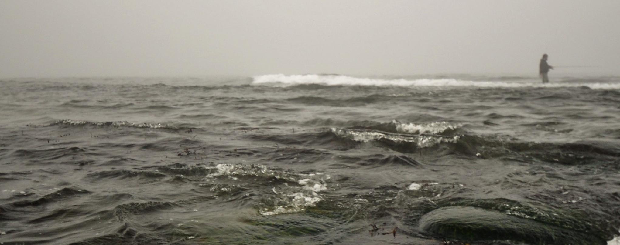 Solide fangstrater af kysthavørreder i foråret 2019