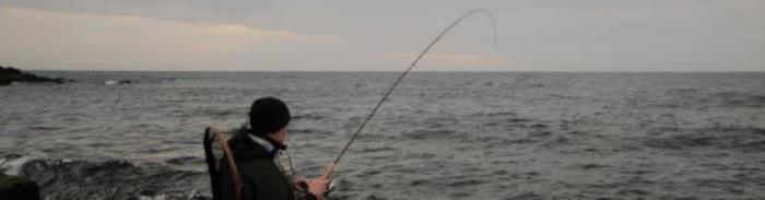 Havørred fiskeriet i efteråret 2019 var som gennemsnittet