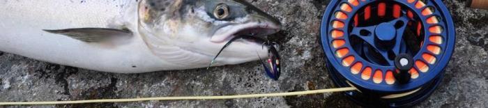 Husker du kystfiskeriet sidste forår?