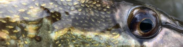 Marts sparker forårsfiskeriet i gang