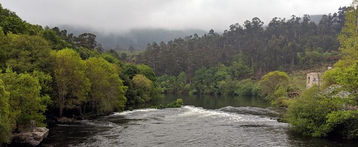 Salmon in River Minho - River Minho