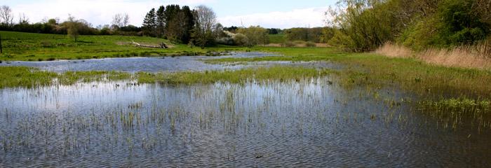 Geddefabrik i Hulbæk - vådområde i eng