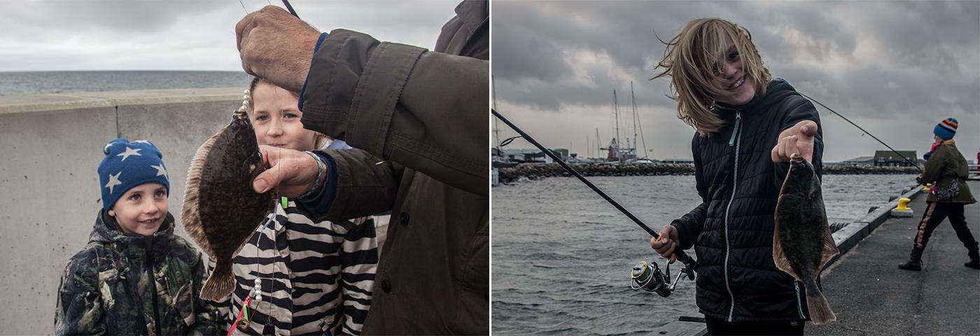 Nyt projekt vil bidrage til mere biodiversitet og flere fisk i danske havne. Foto: Rune Westphal.