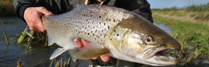 Havørredfiskeriet i vandløb er populært i sensommeren.